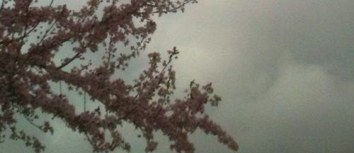 Feb gray sky