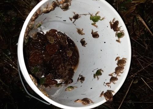 Frog escape (1)