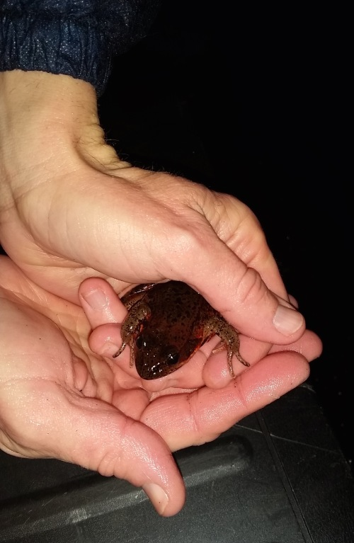 Frog in hand (1)