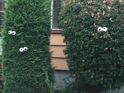 Eyes see me.