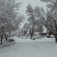 Snow Daze Indeed