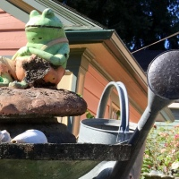 A Feast For February Eyes: Birdbath Mania in Laurelhurst